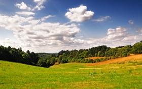 Обои трава, деревья, фото, природа, пейзажи, зелень