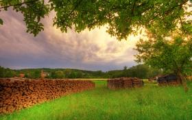 Обои лето, трава, ветки, природа, зеленые, дрова, луга