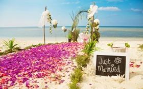 Обои побережье, природа, лепестковая дорожка, тропики, беседка, море, цветы