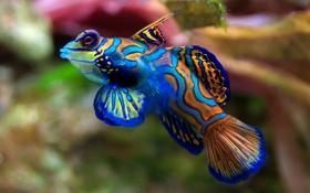 Обои Рыба, аквариум, цвета