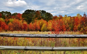 Картинка лес, осень, трава, небо, забор, листья, ограда