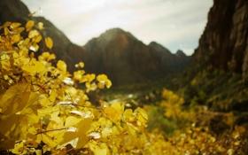 Обои осень, фото, осенние обои, листья, растения, природа, пейзажи