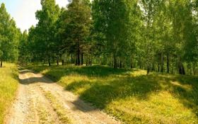 Обои дорога, лес, лето, деревья, природа, обои, wallpaper