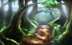 Обои деревья, природа, тропа