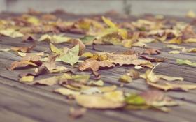 Обои осень, асфальт, листья, сухие