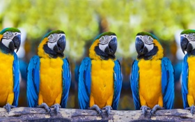 Картинка bird, parrot, ara ararauna