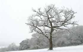 Обои зима, снег, деревья, пейзажи, зимние обои