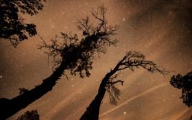 Обои космос, звезды, деревья, пространство