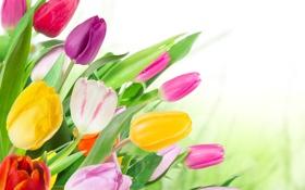 Картинка тюльпаны, tulips, букет, colorful, цветы