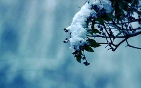 Обои фото, дерево, деревья, мороз, природа, зима, снег