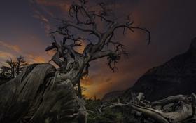 Картинка закат, ветки, небо, природа, корни, дерево