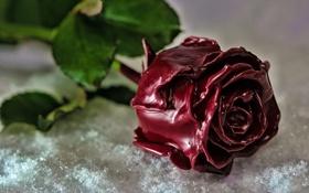 Обои снег, фон, роза