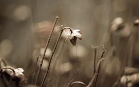 Обои макро, природа, фото, фон, растения, сухие, картинка