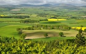 Обои лето, поля, долина