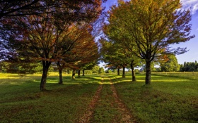 Обои дорога, осень, деревья, аллея