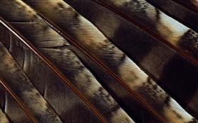 Обои фон, перья, веер, пятна