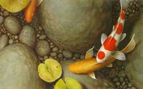 Картинка камни, пруд, кувшинка, рыбки, листья, галька, арт