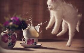Обои цветы, котенок, испуг, молоко, кружка, cat, kitty