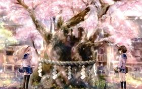 Картинка девушки, дерево, дома, аниме, сакура, арт, школьницы