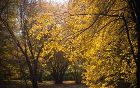 Обои осень, листья, солнце, желтый, природа, дерево
