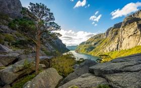 Обои горы, скалы, дерево, озеро, фьорд