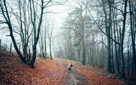 Картинка шапка, осень, деревья, лес, куртка, девушка, человек