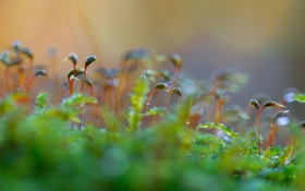 Обои зелень, природа, ростки, растения