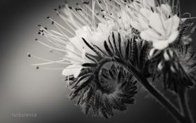 Картинка цветок, макро, фотограф, photography, photographer, macro, Björn Wunderlich