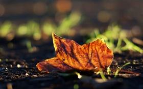 Картинка осень, трава, фото, опавший, размытость, обои, фон