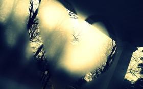 Обои стекло, деревья, фон, сердце