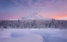 Обои снег, рассвет, елки, гора