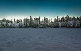 Картинка зима, поле, пейзаж