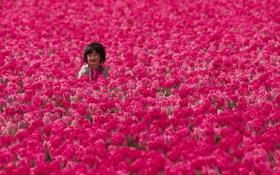 Обои поле, девочка, тюльпаны