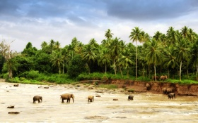 Обои песок, животные, деревья, природа, пальмы, фото, обои