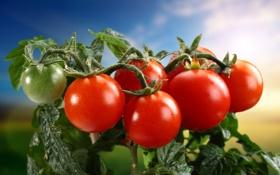 Картинка томаты, овощи, помидоры