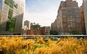 Обои нью-йорк, New York, usa, nyc