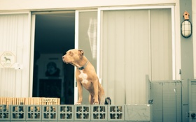 Картинка дом, собака, страж