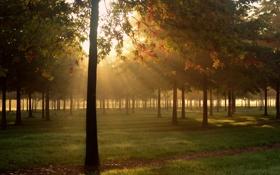 Обои осень, трава, свет, природа, роса, парк, утро
