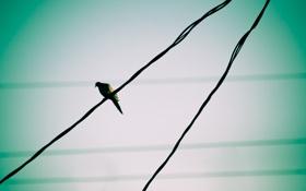 Картинка птичка, проводе