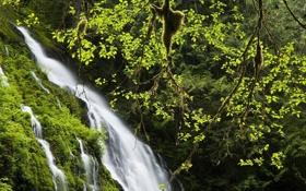 Обои зелень, листья, вода, деревья, природа, ручей, течение