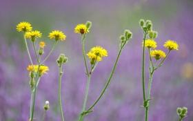 Картинка цветы, растение, божья коровка, стебель, насекомое