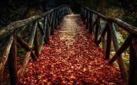 Картинка осень, листья, мост, природа, время года