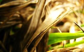 Обои трава, макро, фото, фон, обои, растения