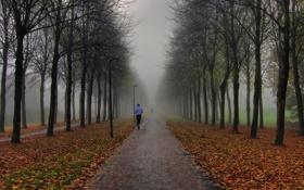 Обои осень, туман, парк, люди, утро, фонари, пробежка