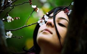 Обои девушка, цветы, весна