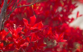 Обои листья, ветки, краски, дерево