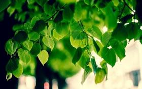 Обои макро, природа, обои, листва