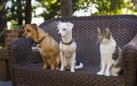 Картинка кошка, собаки, кот, друзья, троица
