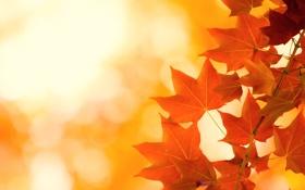 Обои осень, листья, яркость