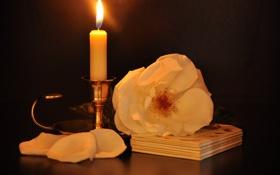 Картинка чайная, роза, белая, свеча, подсвечник